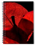 Sunlight Behind The Petals Spiral Notebook