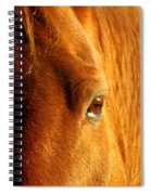 Sunlight Eyes Spiral Notebook