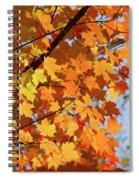 Sunlight In Maple Tree Spiral Notebook