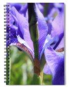 Sunlight On Blue Irises Spiral Notebook