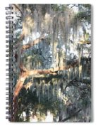 Sunlight On Mossy Tree Spiral Notebook