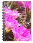 Sunlight On Pink Cactus Blooms Spiral Notebook