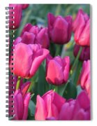 Sunlight On Pink Tulips Spiral Notebook