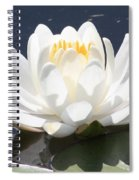 Sunlight On Water Lily Spiral Notebook