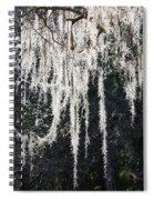 Sunlight Through Spanish Moss Spiral Notebook