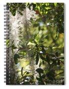 Sunlight Through The Oak Spiral Notebook