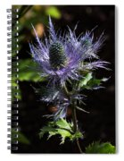 Sunlit Bloom Of Alpine Sea Holly Spiral Notebook