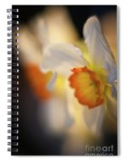 Sunlit Daffodils Spiral Notebook