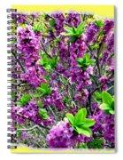 Sunlit Daphne Spiral Notebook