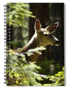 Sunlit Deer Friend Spiral Notebook