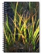 Sunlit Grass Spiral Notebook