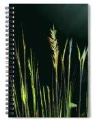 Sunlit Grasses Spiral Notebook