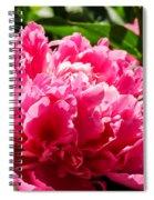 Sunlit Pink Peony Spiral Notebook