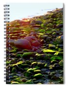 Sunlit Stones Spiral Notebook