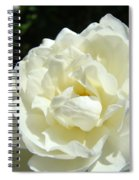 Sunlit White Rose Art Print Floral Giclle Print Baslee Troutman  Spiral Notebook