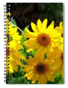 Sunlit Wild Sunflowers Spiral Notebook
