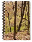 Sunlit Woods Spiral Notebook