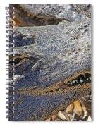 Sunning Alligator 2 Spiral Notebook