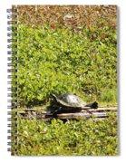 Sunning Turtle In Swamp Spiral Notebook