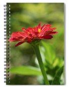 Sunning Zinnia Spiral Notebook