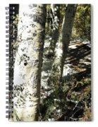 Sunny Aspen Shadows Spiral Notebook