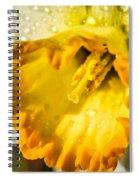 Sunny Daffodil Spiral Notebook