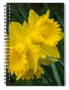 Sunny Daffodils Spiral Notebook