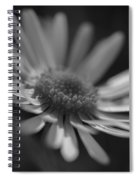 Sunny Daisy Black And White 2 Spiral Notebook