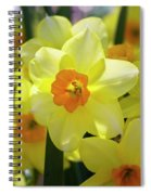 Sunny Narcissus Spiral Notebook