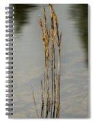 Sunny Reeds Reflect Spiral Notebook