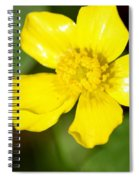 Sunny Yellow Cinquefoil Spiral Notebook