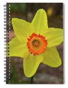 Sunrise Daffodil Spiral Notebook