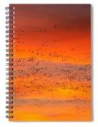 Sunrise Migration Spiral Notebook