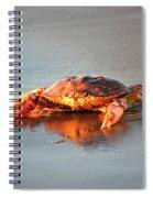 Sunset Crab Spiral Notebook