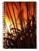 Sunset Grass Spiral Notebook