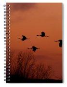 Sunset Sandhill Cranes  Spiral Notebook