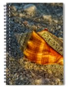 Sunset Seashell Spiral Notebook