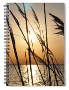 Sunset Through The Dune Grass Spiral Notebook