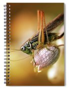 Sunset With A Big Grasshoper Spiral Notebook