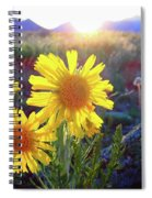 Sunsets And Sunflowers In Buena Vista Spiral Notebook