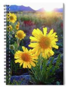 Sunsets And Sunflowers Of Buena Vista 2 Spiral Notebook