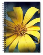 Sunshine And Shadows Spiral Notebook