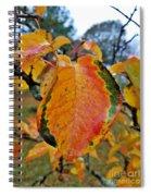 Sunshine In The Rain Spiral Notebook