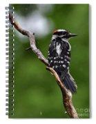 Sunshine Needed - Male Downy Woodpecker Spiral Notebook