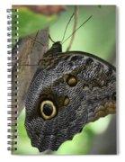 Superb Markings On An Owl Butterfly In A Garden Spiral Notebook
