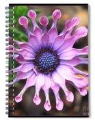 Superstar Spiral Notebook