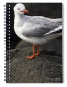 Suprised Australian Seagull Spiral Notebook