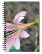 Surprise Lily Spiral Notebook