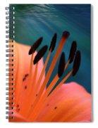 Surreal Orange Lily Spiral Notebook