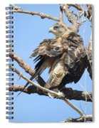 Swainson Hawk Spiral Notebook